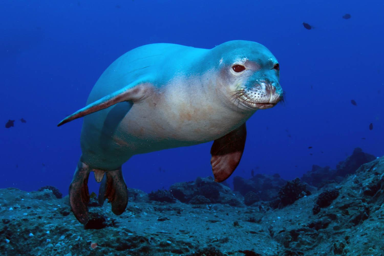 Marine animals in Greece