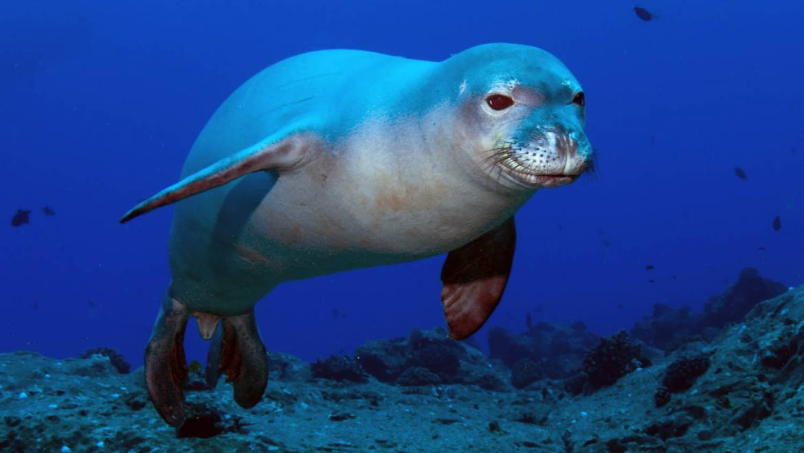 Marine animals in Greece